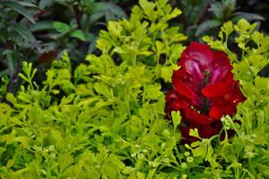 Overgreen. by Matus76