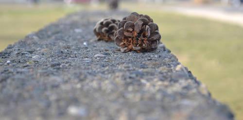 Pinecones by FrankTheSixFootBunny