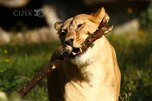 Cat stick by Lion-Redmich