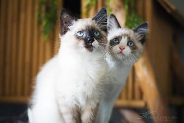 Siblings by kalicobay