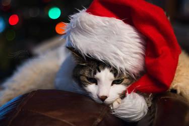 Waiting for Santa by kalicobay