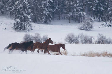 Winter Horses by kalicobay