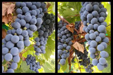 Grape Vines by KillerWereWolf1