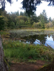 Bog/Marshes by KillerWereWolf1