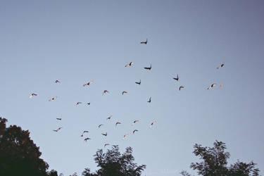 Pigeons by MisterMistrz