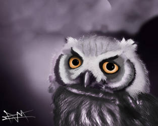 Owl by SniperFameVeroia