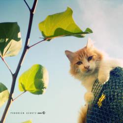 Stibbert's Cat by stregatta75
