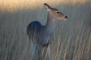 Deer by erikjmeyers