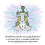 A Fantastically False Fact About Tortoises by Zombie-Kawakami