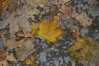 Leaf by juliejools