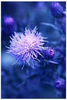 Still feelin' blue.. by Shace