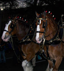 Budweiser Horses by Touch-and-Go