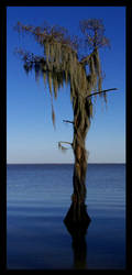 Spanish Moss II by Touch-and-Go