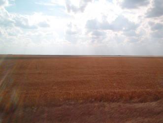 Wheat field by gnrbishop
