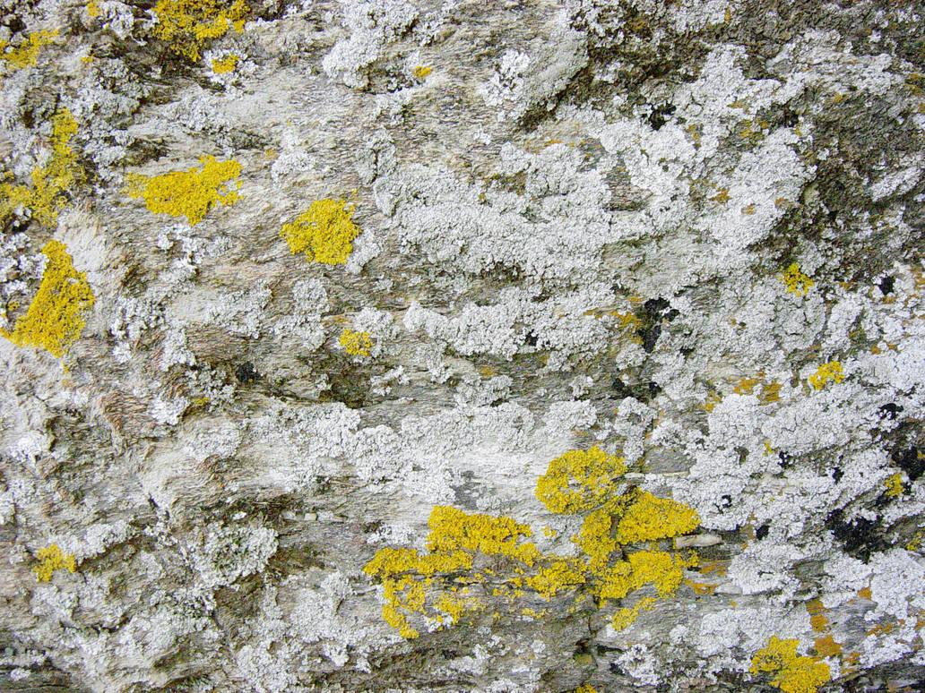 Lichen-covered stone by AeonOfTime