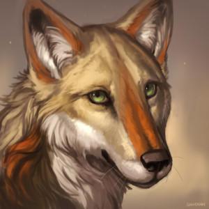 KotaCoyote's Profile Picture