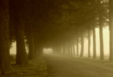 Morning Fog 1 by KenHansen
