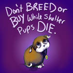 While Shelter Pups Die by carlylyn