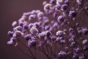 baby's breath by Nimbue