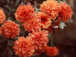 autumn in bloom by Nimbue
