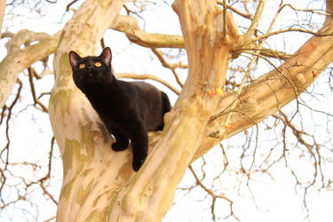kiki in a tree by Nimbue