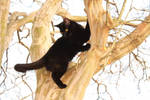 kiki in a tree II by Nimbue