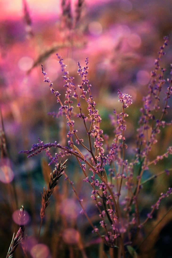 faerie's twilight by Nimbue