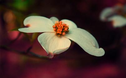 hope springs eternal by Nimbue