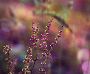 violet grasses by Nimbue