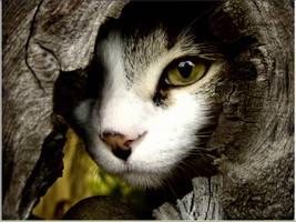 my cat by stavrosr