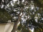2017 Winter - Oak Glen 2 by symonx