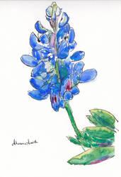 Bluebonnet by ElorieAlton