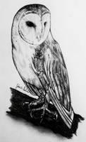 Barn Owl in Pencil by GabrielleC-Drawings