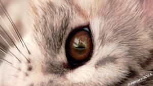 Brown Eye by Thapojo