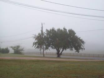 Tree in Fog by SeraphanRaziel
