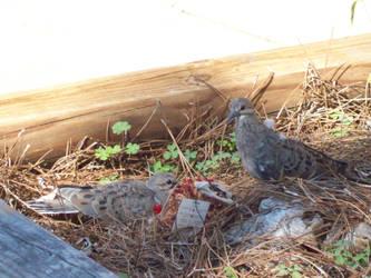 Pigeon 8 by SeraphanRaziel