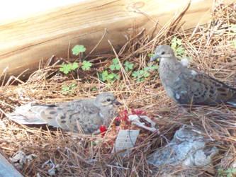 Pigeon 9 by SeraphanRaziel