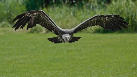El condor pasa by Witoldhippie