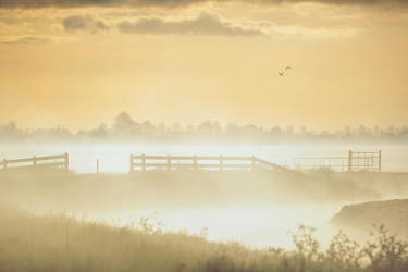 Morning mist by Witoldhippie