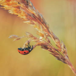 What does a ladybug? by Witoldhippie