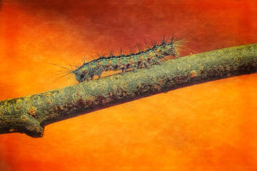 Caterpillar by Witoldhippie