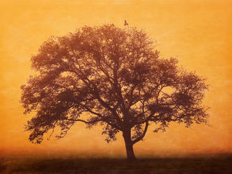 The tree by Witoldhippie
