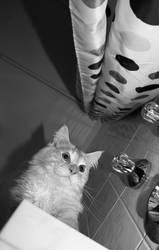 Cat 001 by hauskapellmeister
