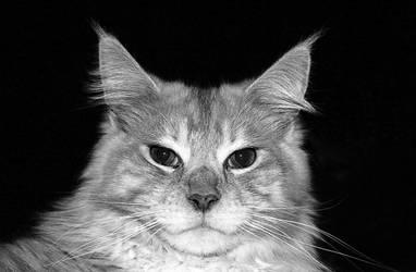 Cat 004 by hauskapellmeister