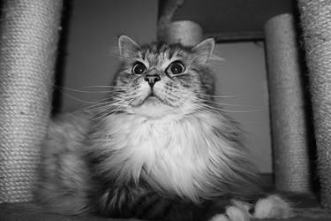 Cat 006 by hauskapellmeister
