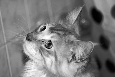 Cat 007 by hauskapellmeister