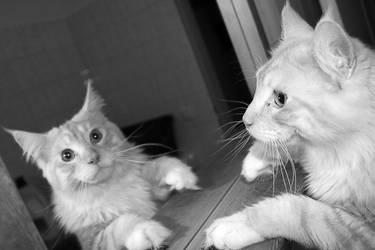 Cat 008 by hauskapellmeister