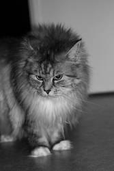Cat 009 by hauskapellmeister