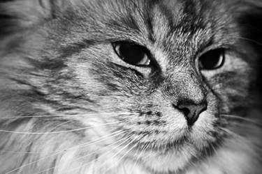 Cat 012 by hauskapellmeister
