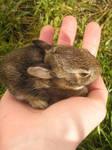 Rabbit by coldshadows